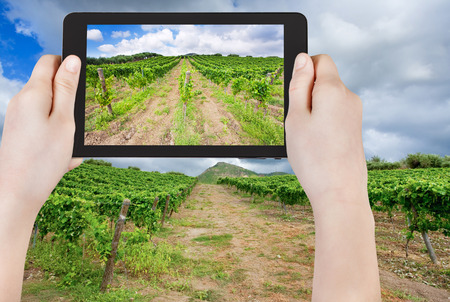 region sicilian: travel concept - tourist taking photo of vineyard under clouds in wine region Etna, Sicily on mobile gadget, Italy
