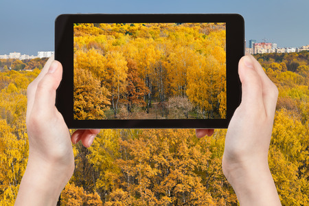 travel concept - tourist takes picture of yellow autumn forest in fall season on smartphone, Moscow, Russia photo