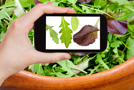 photographing food concept - tourist takes picture of italian leafs of arugula salad on smartphone, photo
