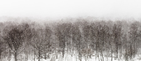 panorama view: above view on snow storm in forest in spring