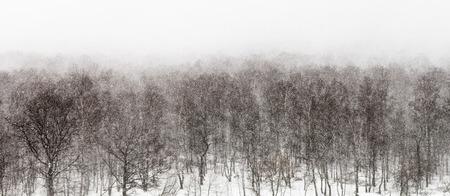 arbre vue dessus: vue de haut sur tempête de neige dans la forêt au printemps Banque d'images