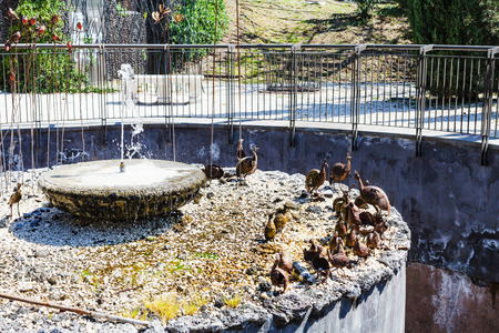 bellini: CATANIA, ITALY - APRIL 5, 2015: fountain in Bellini Garden in Catania, Sicily, Italy. The Bellini Garden is in via Etnea, the most beatiful part of Catania, and its surface is over 70000 square meters