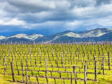 region sicilian: empty vineyard in Etna winemaking region in spring, Sicily, Italy