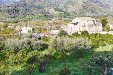 outskirts: citrus orcahard in backyard of urban house on outskirts of town Gaggi in green hills in spring day, Sicily, Italy