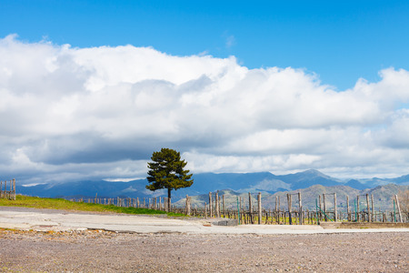 region sicilian: white clouds over vineyard in Etna agricultural region in spring, Sicily, Italy