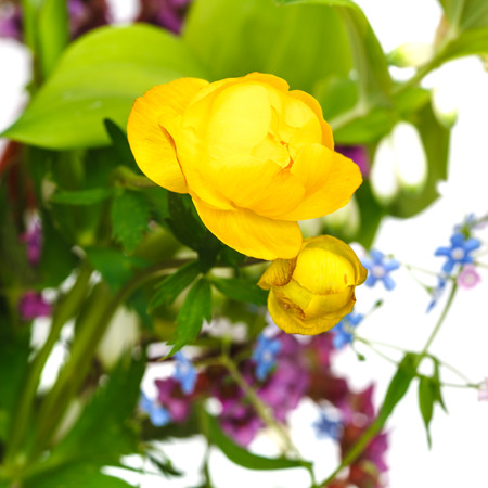 fresh yellow trollius flowers in posy close up photo