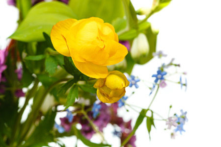 yellow trollius flowers in bouquet close up with white copyspace photo