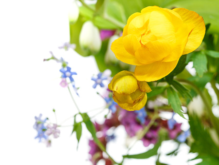 yellow trollius flowers in posy close up with white copyspace photo