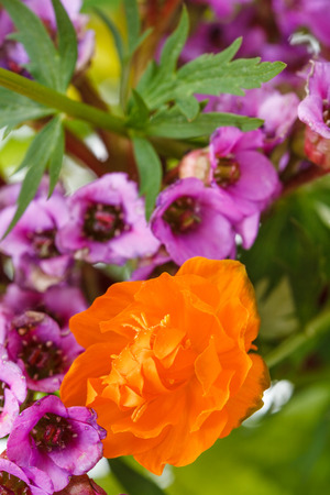 natural Trollius and bergenia flowers close up in posy photo