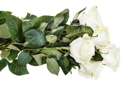 armful: side view of armful of white roses isolated on white background Stock Photo
