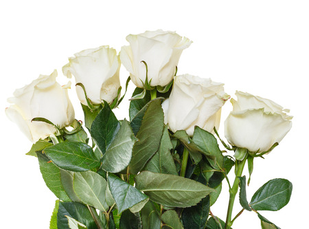 nosegay: side view of bouquet of white roses isolated on white background Stock Photo