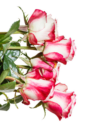 nosegay: side view of bunch of pink roses isolated on white background Stock Photo