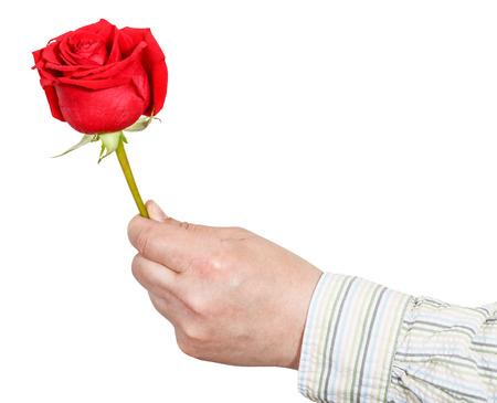 arm bouquet: male hand holds red rose flower isolated on white background