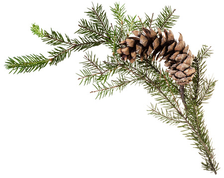christmas decorations with white background: detail of christmas frame - twig of fir tree with cone on white background Stock Photo