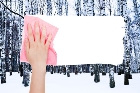 deletes: season concept - hand deletes winter birch trees by pink rag from image and white empty copy space are appearing