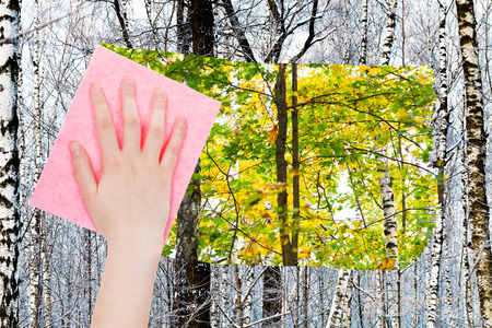 deletes: season concept - hand deletes bare trunks in winter forest by pink cloth from image and summer woods are appearing