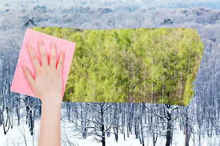 deletes: season concept - hand deletes winter woods by pink cloth from image and green summer forest are appearing Stock Photo