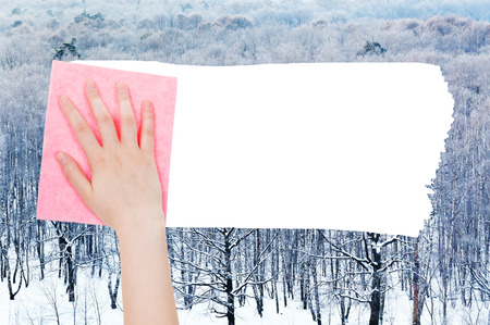 deletes: season concept - hand deletes winter woods by pink rag from image and white empty copy space are appearing