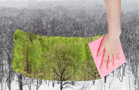 deletes: season concept - hand deletes snowing over winter woods by pink cloth from image and summer green trees are appearing