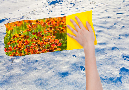 deletes: season concept - hand deletes snowy wild area by yellow cloth from image and meadow with red flowers are appearing