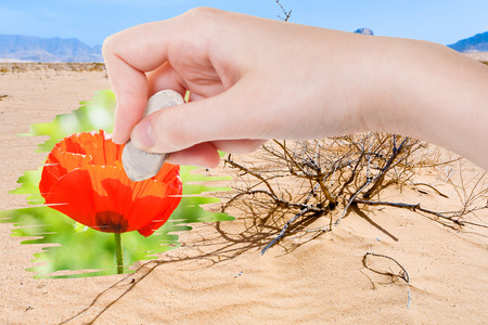 arise: weather concept - hand deletes dry sand desert by rubber eraser from image and red poppy flower are appearing