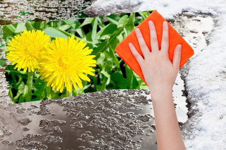 dandelion snow: season concept - hand deletes melting snow by orange cloth from image and yellow dandelion flowers are appearing Stock Photo