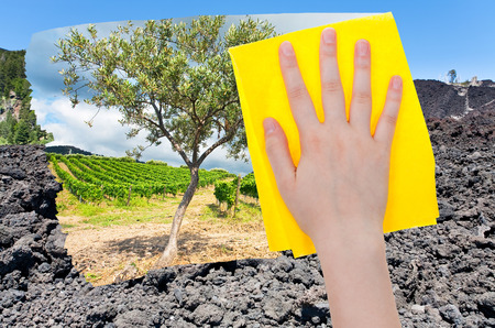 volcano slope: travel concept - hand deletes hardened black lava on Etna volcano slope by yellow cloth from image and olive tree and vineyard are appearing Stock Photo