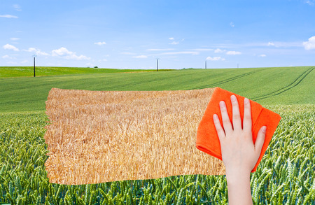 deletes: season concept - hand deletes green wheat field by orange cloth from image and harvested straw field is appearing Stock Photo