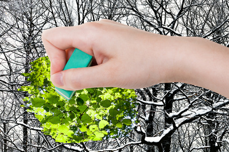 arise: season concept - hand deletes winter woods by rubber eraser from image and green summer foliage are appearing