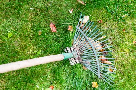 raking leaves from green lawn by rake