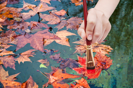 autumn colour: nature concept - hand with paintbrush paints maple leaves floated in pool in red colour in autumn