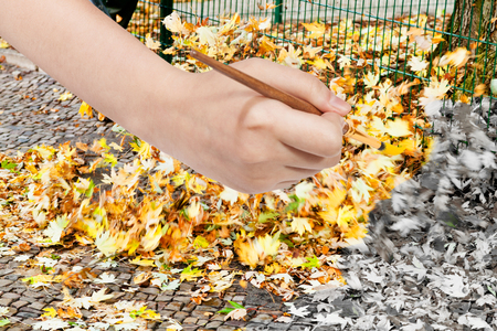 leaf color: nature concept - hand with paintbrush paints fallen yellow leaves on street in autumn Stock Photo