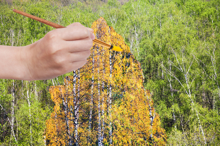 arise: nature concept - seasons and weather changing: hand with paintbrush paints yellow autumn birch in green summer grove Stock Photo