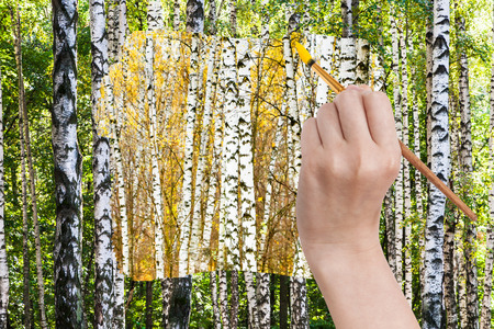 arise: nature concept - seasons and weather changing: hand with paintbrush paints yellow autumn birch grove in green summer birch forest