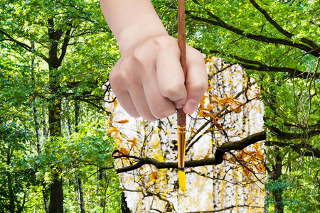 arise: nature concept - seasons and weather changing: hand with paintbrush paints yellow leaves on oak branch in green forest