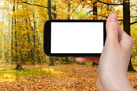 sun screen: travel concept - hand holds smartphone with cut out screen and oak grove illuminated by sun in autumn on background