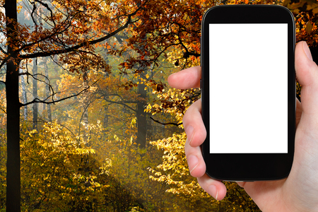 sun screen: travel concept - hand holds smartphone with cut out screen and forest illuminated by autumn sun on background