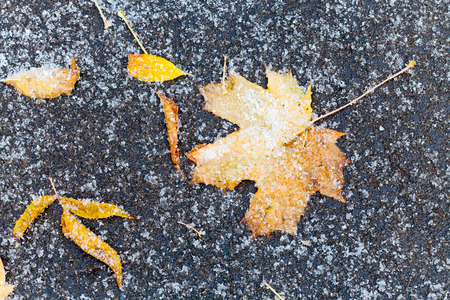 first: frozen orange and yellow fallen leaves under first snow on asphalt path in autumn