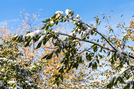 first day: first snow on green leaves and blue sky in autumn day Stock Photo