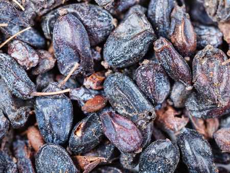 barbery: food background - dried black berberis fruits close up