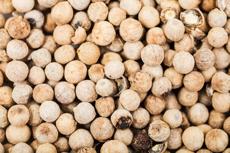 close up food: food background - white pepper peppercorns close up