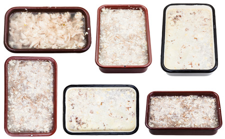 solidify: set of frozen aspics with meat in metal pans isolated on white background