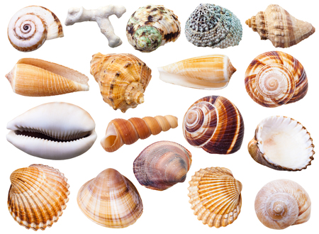 set of various mollusc shells isolated on white background Archivio Fotografico