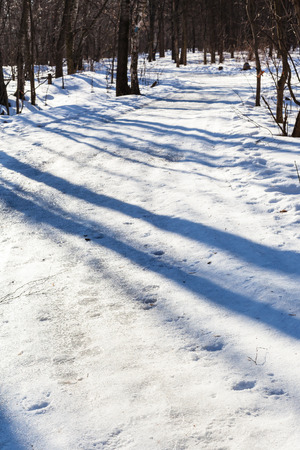 frost bound: slippy country road in forest in sunny winter day