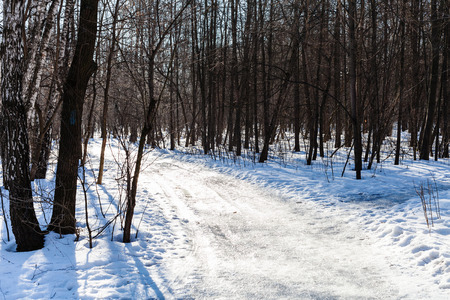 frost bound: slippery road in snowy forest in sunny winter day