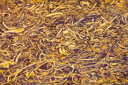 coquina: polished surface of natural gem stone Sea Fossil Jasper (, Snake Jasper, Elephant Skin Jasper, Miriam Agate, Mariyam Agate, Coquina Jasper, Scriptstone, Calligraphy Script Stone)
