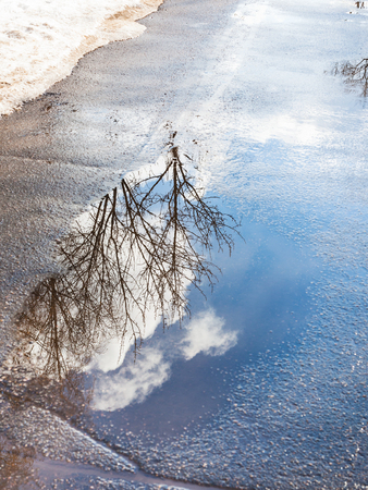 bare trees and sky with clouds reflected in puddle from melting snow on street in sunny spring day