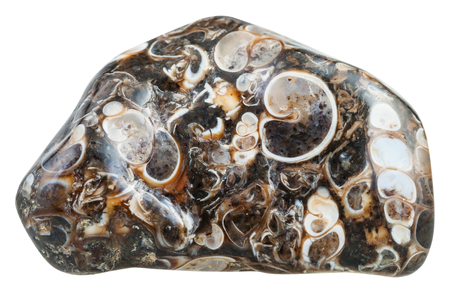 macro shooting of natural mineral stone - tumbled turritella agate (jasper) from Madagascar gemstone isolated on white background