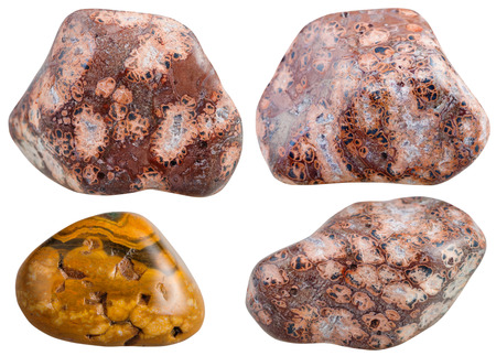 tumbled stones: set of various leopard skin jasper natural mineral stones and gemstones isolated on white background