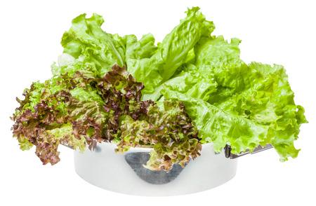 steel pan: hojas verdes crudas de Lollo Rosso y lechuga de hoja en cacerola de acero aisladas sobre fondo blanco Foto de archivo